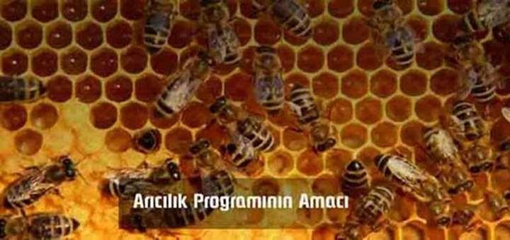 Arıcılık Programı
